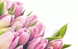 Tulips and their meaning. To buy bouquets of tulips