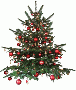 live decorated Christmas tree