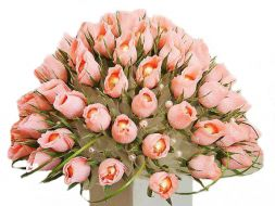 pink tulips from sweets