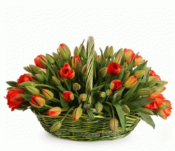 basket of red tulips Signs of Love