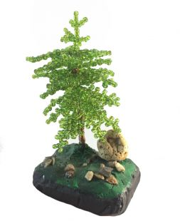 Thuja, spruce of beads