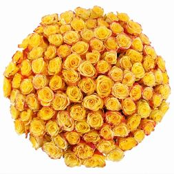 Bouquet of 101 yellow roses