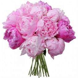 pink peonies in a bouquet
