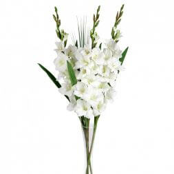 bouquet with white gladioluses