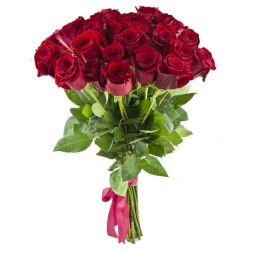 holland red premium roses