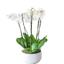 White orchids in a ceramic cup