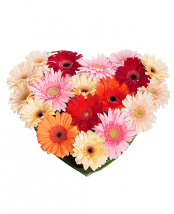 gerberas сomposition in shape of heart