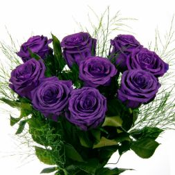 Purple roses 9 pieces