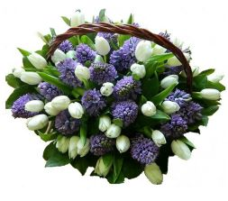 basket of tulips and hyacinths