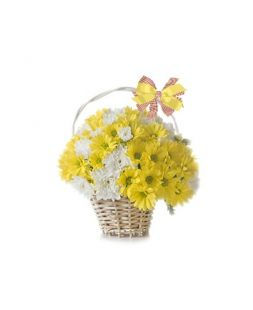 basket of white and yellow chrysanthemum