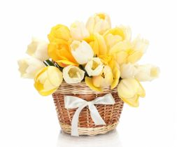 basket with white and yellow tulips