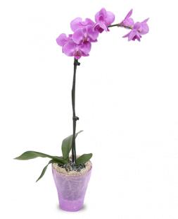 Flori De Camera Orhidee