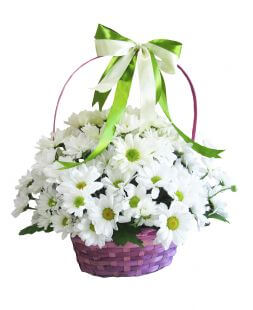 basket of white chrysanthemums