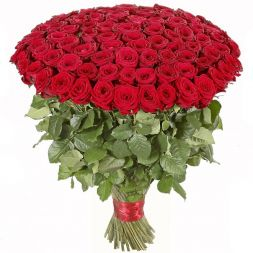 151 red roses 70 cm