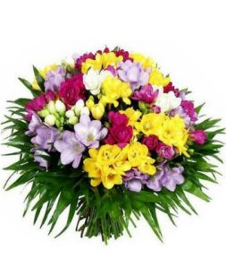 Bouquet of multi-colored freesias