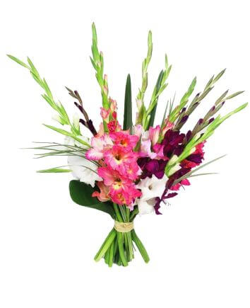 Bouquet with gentle gladioluses