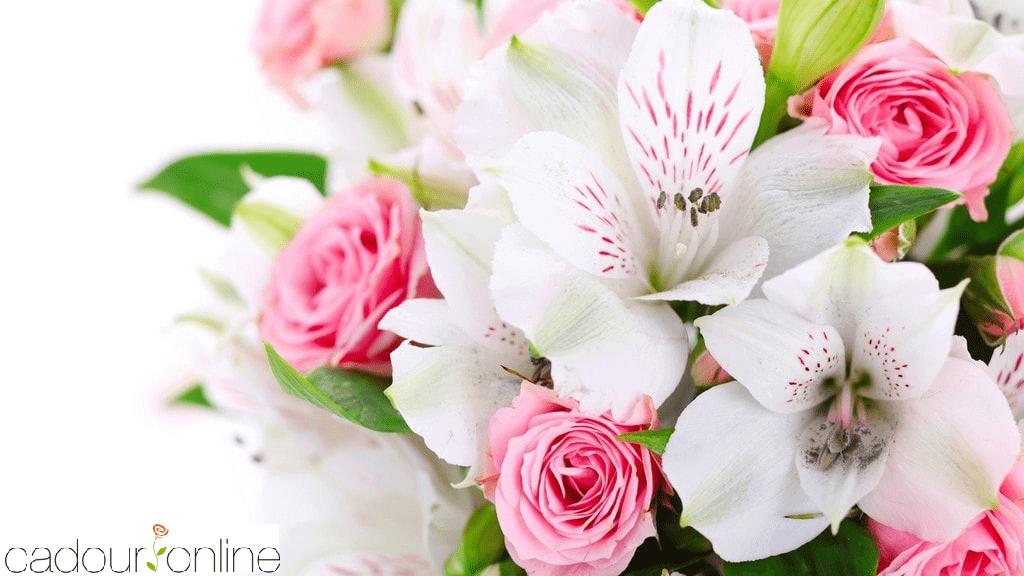 Живые цветы кишинев доставка цветов и конфет